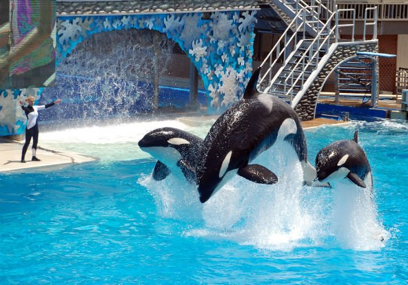 SeaWorld San Diego killer whale habitat expansion