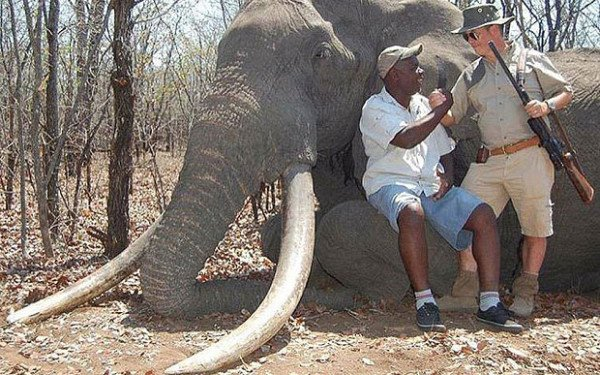 Zimbabwe elephant killed by German hunter