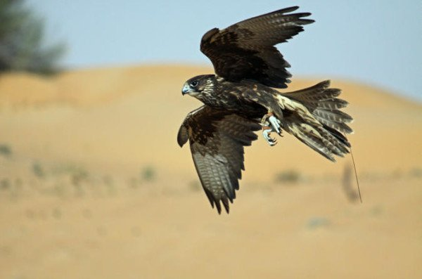 Qatari hunters kidnapped in Iraq