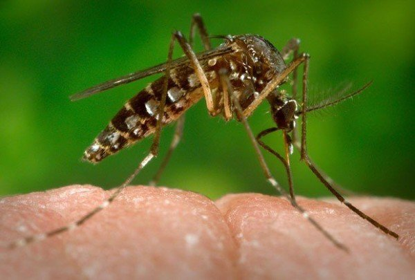 Zika outbreak Americas