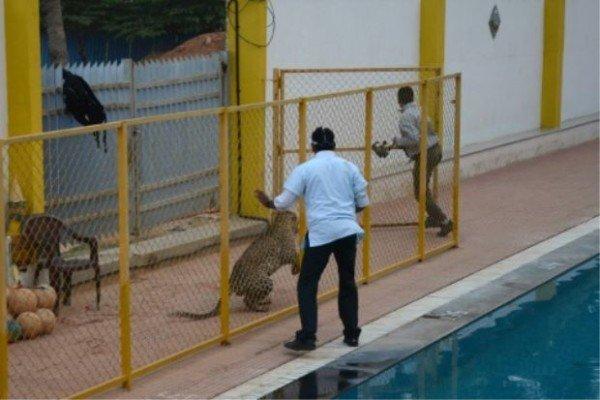 Leopard Bangalore school