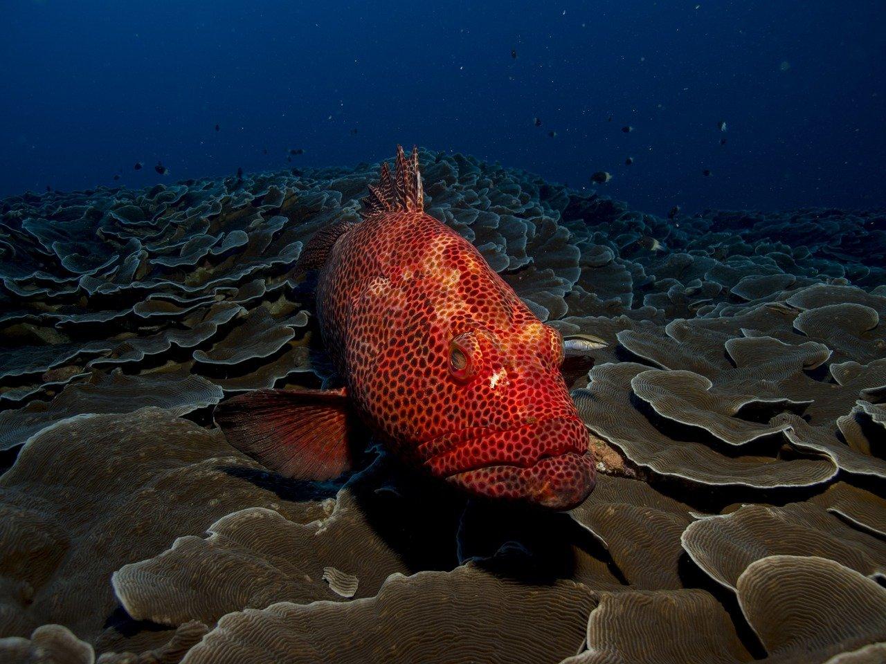 scuba Mozambique